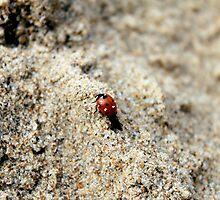 Lady Bug Beach by UrbanPortraits