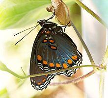 Butterfly Nursery by JonWoodhams
