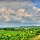 Scenic Vann's Valley by Patricia Montgomery