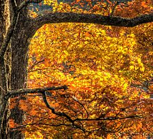 Golden Moment by C David Cook