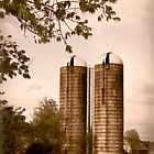 Morgan Dairy Grain Silos by Patricia Montgomery