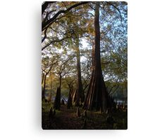 Three Rivers Cypress Trees Canvas Print
