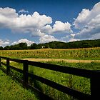 Summer in the Country by Patricia Montgomery
