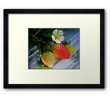 The Strawberry Stage. Framed Print