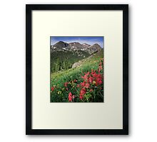 Summer Paint Brush - Indian Peaks Wilderness Framed Print