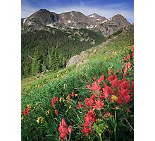 Summer Paint Brush - Indian Peaks Wilderness Photographic Print