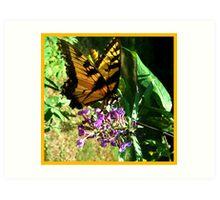 Butterfly Wings Series Art Print