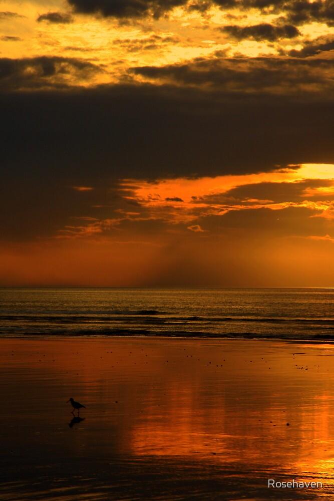 """Pied Stilt at Sunset ..."" by Rosehaven"