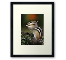 In His Own World / Chipmunk  Framed Print