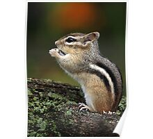 In His Own World / Chipmunk  Poster
