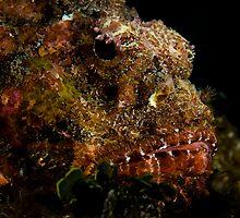 Scorpionfish by tkrebs