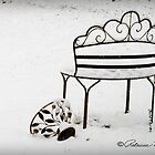 The Bench by Patricia Montgomery