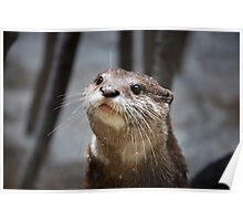 the cutest otter ever Poster