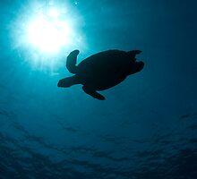 Turtle Silhouette by tkrebs