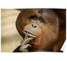 the thinking orangutan Poster