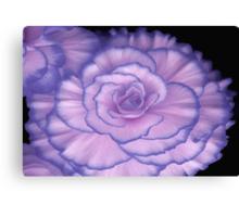 Violet Beauty Begonia ©  Canvas Print