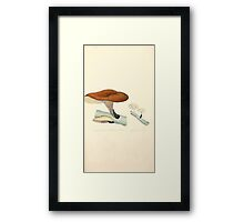 Coloured figures of English fungi or mushrooms James Sowerby 1809 0237 Framed Print
