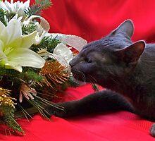Spot's First Bouquet by MotherNature