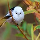 Long-tailed Tit In Autumn Leaves by Sergey Ryzhkov