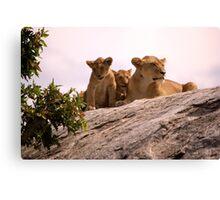 Lions Den Canvas Print