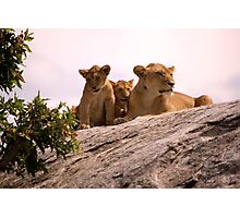 Lions Den Photographic Print