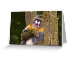 Mirror mirror on the wall .... Greeting Card