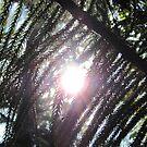 Sunshine through the pine needles by FrogGirl