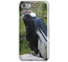 Male Andean Condor on a Rock iPhone Case/Skin