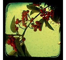 Something in the Air - TTV Photographic Print