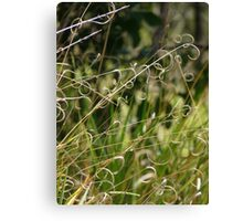 Curly Grass Canvas Print