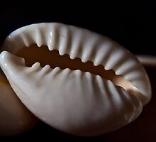 Shell We? by Keith Irving