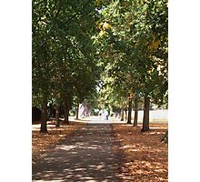 Tree lined avenue Photographic Print