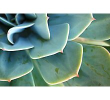 Green Cactus Photographic Print