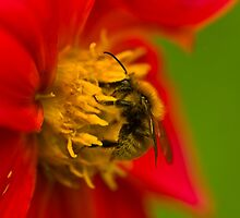 Lost in pollen by Béla Török