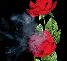 Smokey Rose by GailD