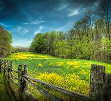 Blue Ridge Meadow by C David Cook