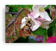 bumble bee in bliss Canvas Print