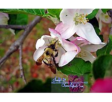 bumble bee in bliss Photographic Print