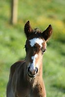 """""""Well I am Cute"""" - 2 day old foal by Sophie Lapsley"""
