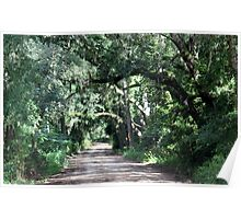 Canopy Road Poster
