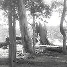 Rural Scene in Mono by pennyswork