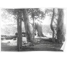 Rural Scene in Mono Poster