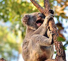 Growling Koala by iDigitalDarwin