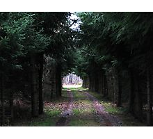 Tree Tunnel Photographic Print
