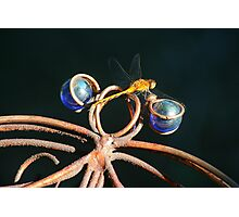 Double Dragonfly Photographic Print