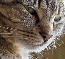 Elke's cat by David Chesluk