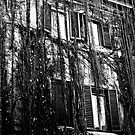 The Ivy House, black and white by Paul Jarrett
