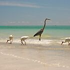 Beach Birds by Mark de Jong