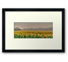 Foggy Sunflowers Framed Print
