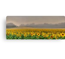 Foggy Sunflowers Canvas Print